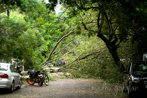 Cyclone Nilam Aftermath