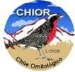 @ CHILE.ORNITOLGICO A.G.@