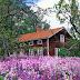 Γεμίστε τον κήπο σας με όμορφα λουλούδια και διακοσμητικά!!