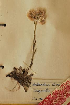 60-luvun kasvisto - Muonamiehen mökki