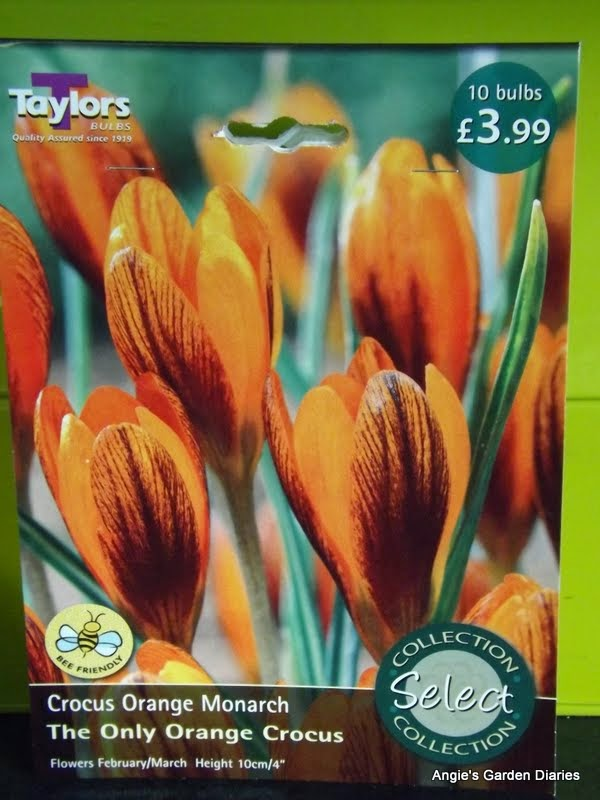 last autumn i planted a small bag 10 bulbs to be precise of crocus olivieri balansae subsp zwanenberg if that doesnt roll of your tongue freely