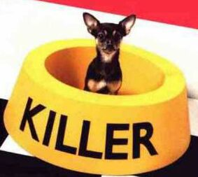killer-funny-dog.jpg