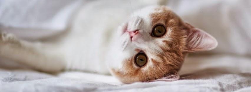 El gatito mas tierno del mundo | Portadas de animales Tiernos