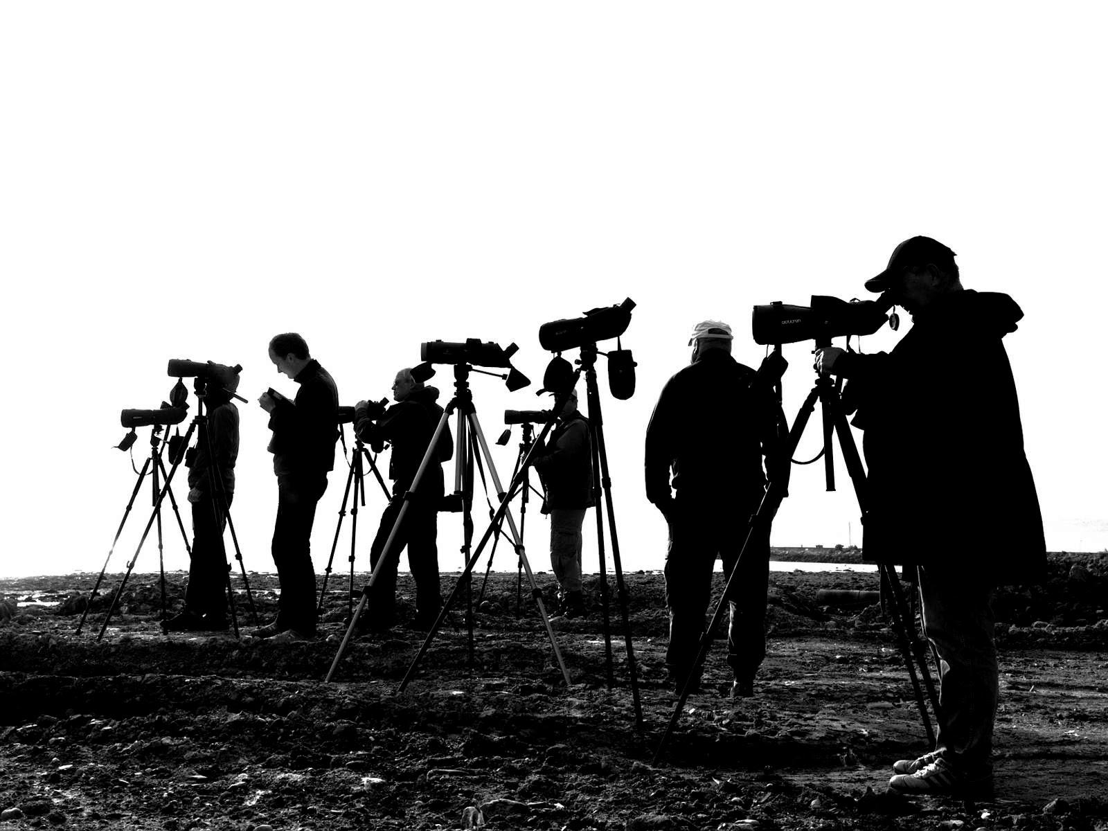 Birdwatchers by Ståle Prestøy