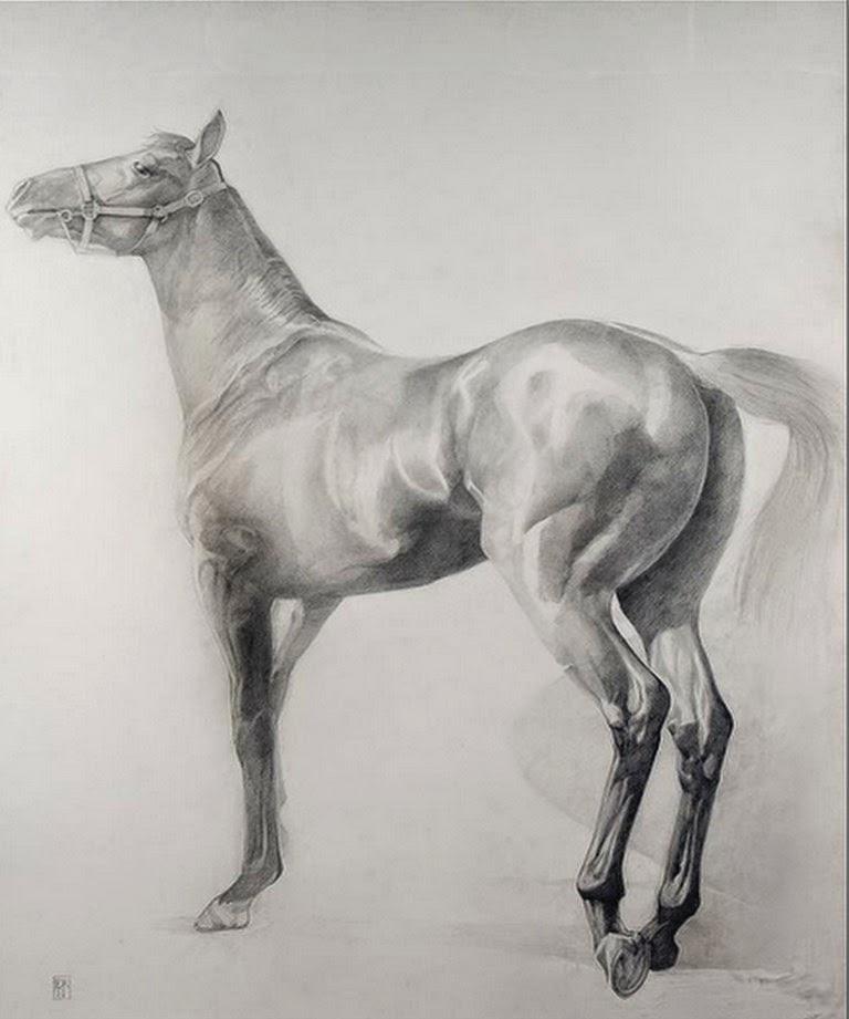 dibujos-de-caballos-en-lapiz