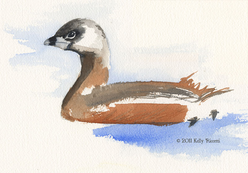 Image result for audubon's painting of pied billed grebe