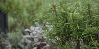http://www.havefolket.com/2012/09/hvilke-planter-er-frostflsomme.html