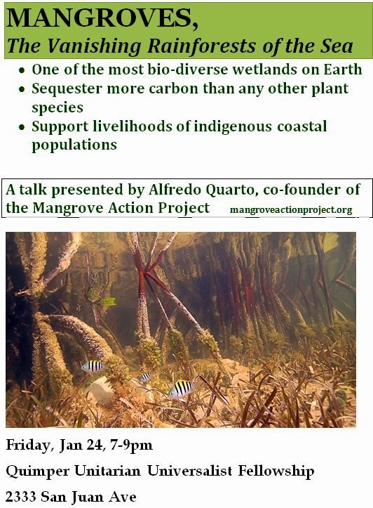 Mangrove+Talk