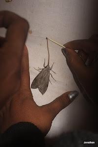 Proboscis of the moth.