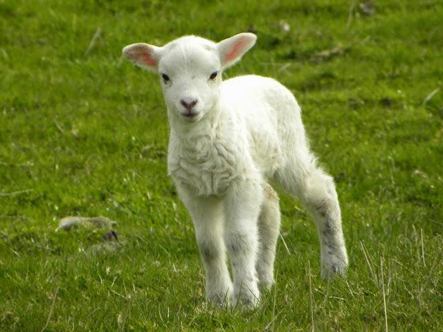 Viên uống nhau thai cừu- Giải pháp an toàn cho làn da tàn nhang