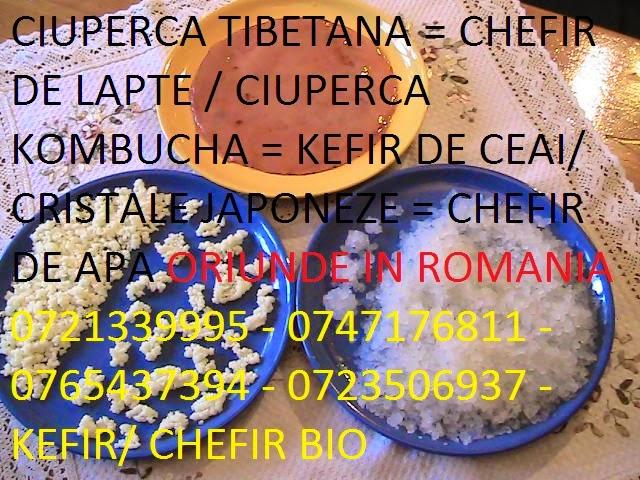 CIUPERCA TIBETANA SI EFECTE EI MIRACULOASE ACUM IN ROMANIA