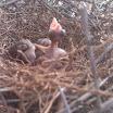 Φωτογραφίες από Βενέττα Χαγιά: Πουλάκια στη φωλιά