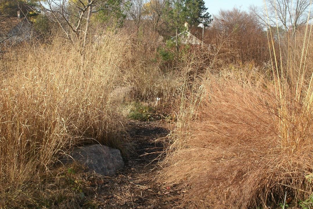 autumn_ornamental_grasses_toronto_botanical_garden_by_garden_muses:_a_Toronto_gardening_blog