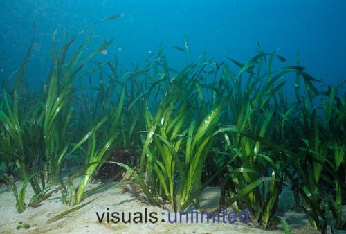 the more hardy aquarium plants