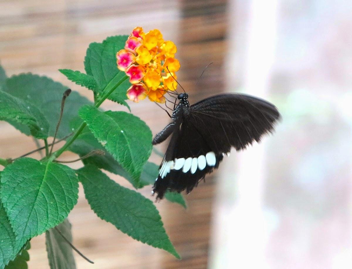 La casa delle Farfalle a Cervia - all rights reserved