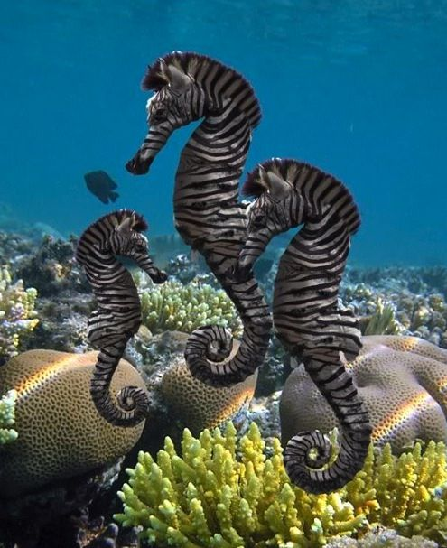 The coolest and most beautiful images of the ocean world for Coolest fish in the world