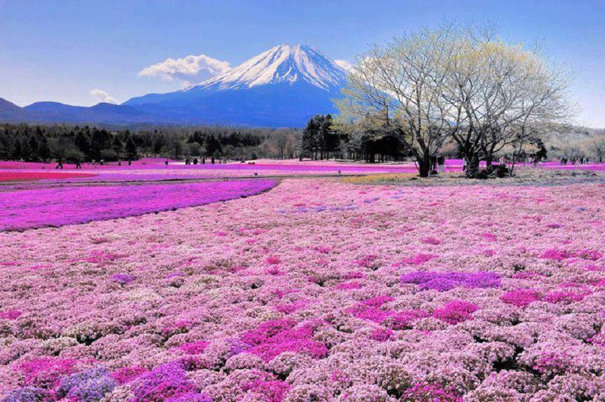 Mount Fuji Japan  city images : Inner Peace In Your Life: Mount Fuji Japan
