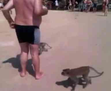 turista despelotado por monos