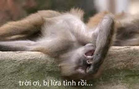Hình ảnh vui về loài Khỉ