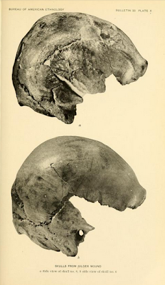 skulls of Nebraska loess man
