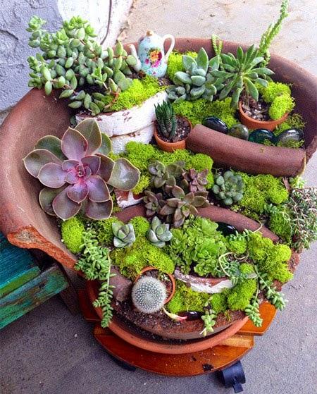 cactus grown in the broken vase | Outdoor Furniture Manufacturers