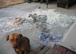Các vấn đề liên quan đến hành vi trên Chó