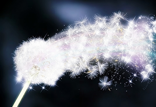 Dandelion Wish Digital Art