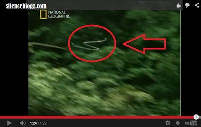 Video Ular Boleh Terbang