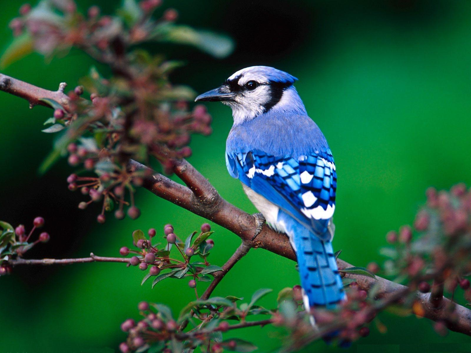 Lovely Small Birds Wallpapers - Various Bird Species