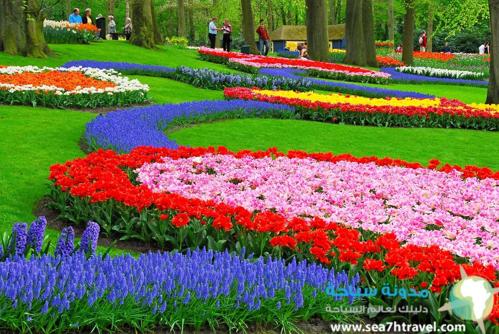 حديقة الزهور في اندونيسيا