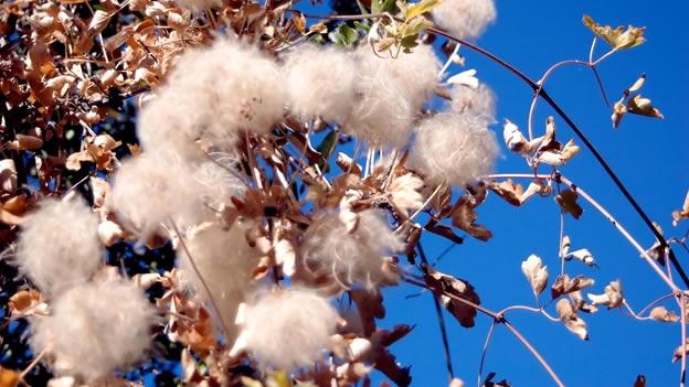 apr 30 proceso productivo del algodón el proceso productivo del
