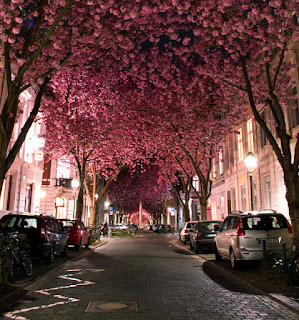 Cherry Blossom Tunnel, Jerman