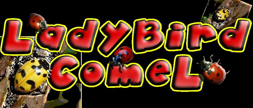 ~LadyBird CoMeL~