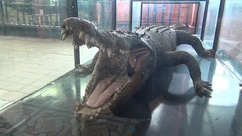 Крокодил в Зоологическом музее МГУ
