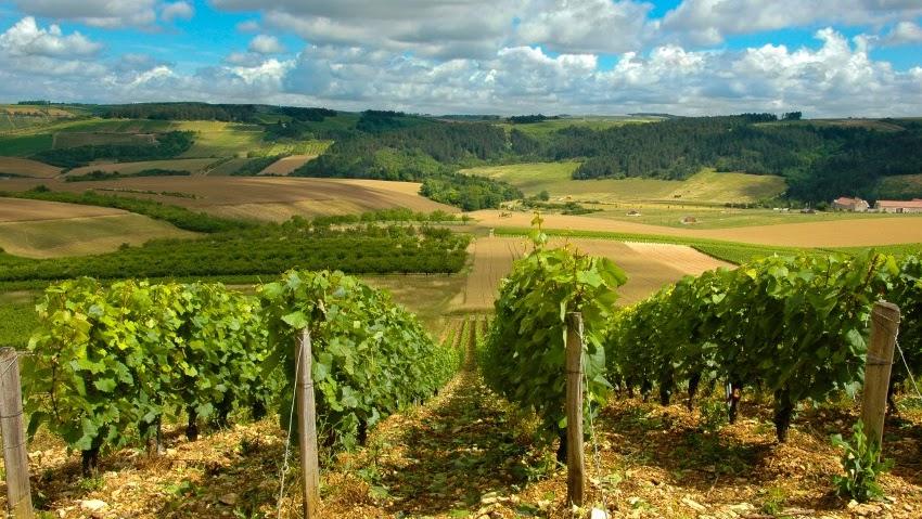 Martha's Vineyard - How To Build A Vineyard