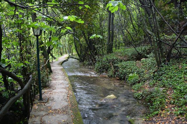 Konavoski Dvori Forest