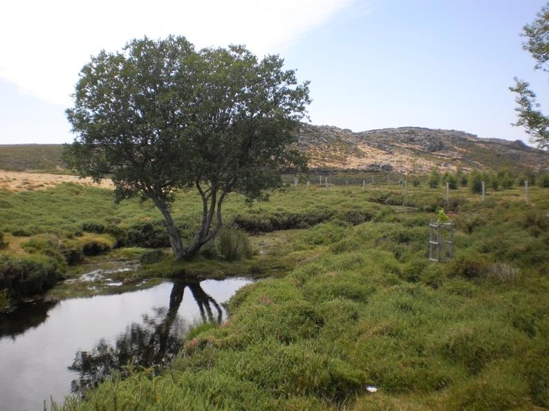 Paz e tranquilidade e água limpinha para tomar banho