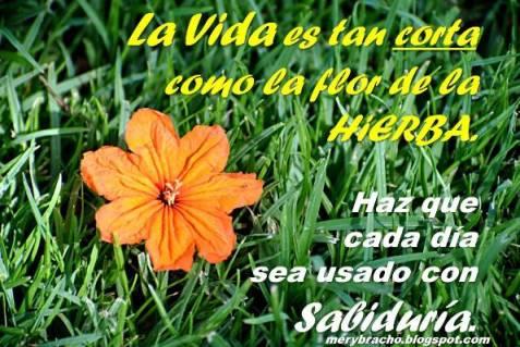 Poema Postal cristiana Buenos días, Dios te de sabiduría, la vida es corta, aprovecha el tiempo, el tiempo se va