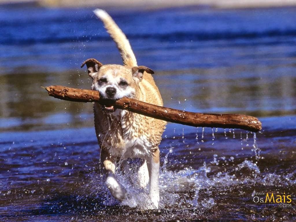 fotos de cachorros de animales - Cara Delevigne posa para fotos con cachorro de león