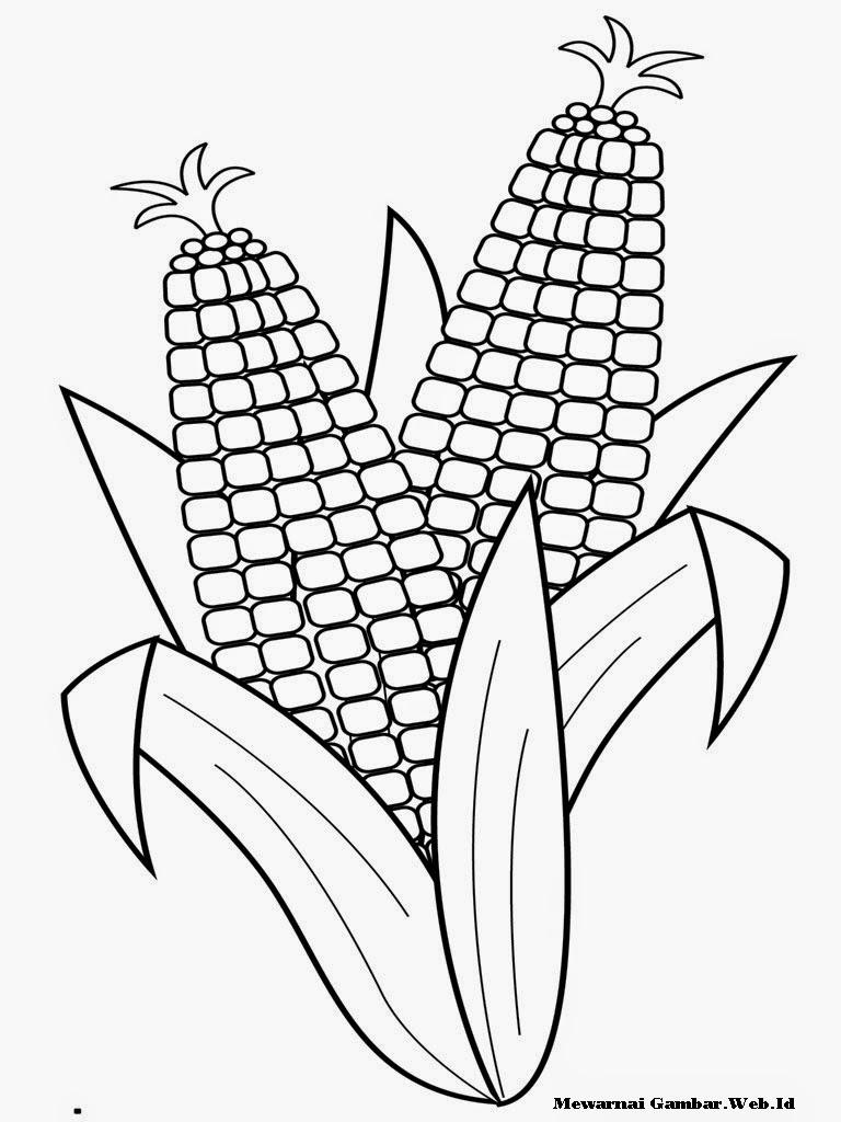 Gambar Sketsa Jagung Hitam Putih Untuk Mewarnai