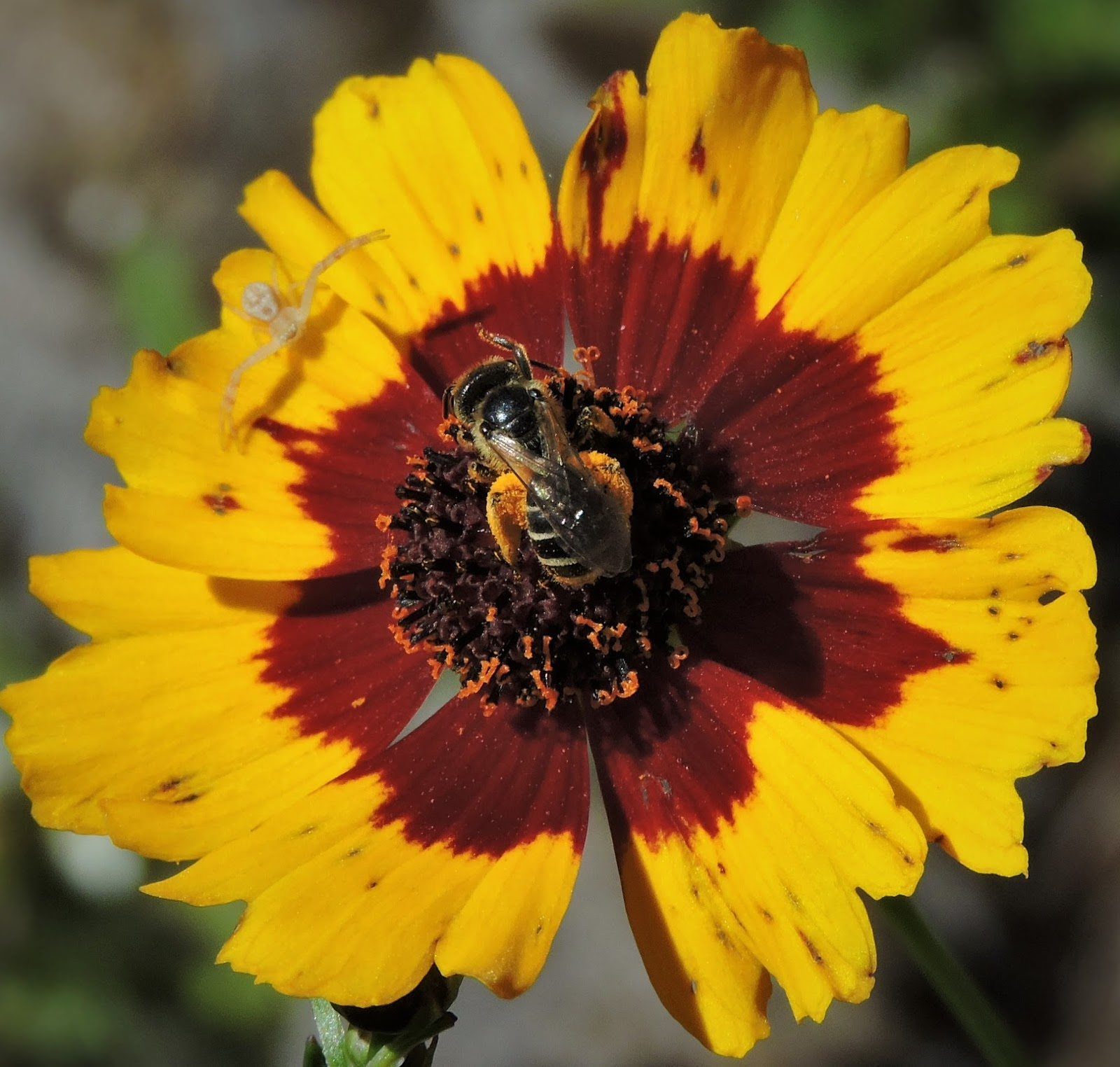The Amateur Anthecologist Tales Of Bees Plants And Sorrow