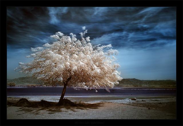 "alt=""Beautiful Amazing Trees"""