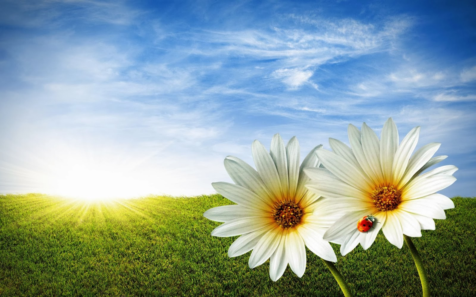 Free Hd Flowers New And Latest 2013