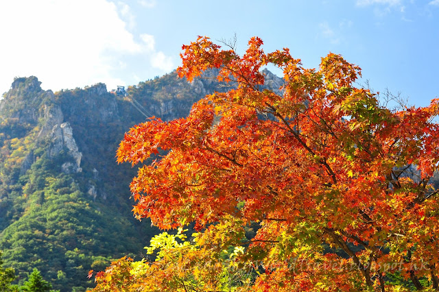 紅葉, 雪嶽山, sorak mountain