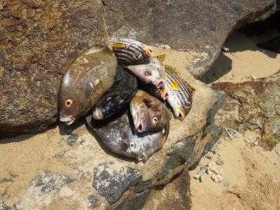 Рыба, Шри-Ланка