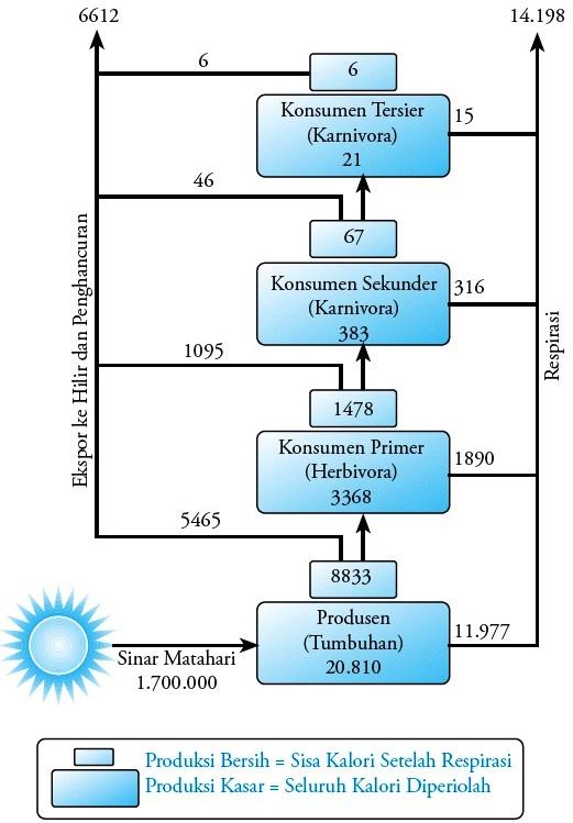 Rantai makanan jaring jaring makanan dan piramida ekologi gambar 6 aliran energi dari satu organisme ke organisme lain kkalm2 tahun ccuart Image collections