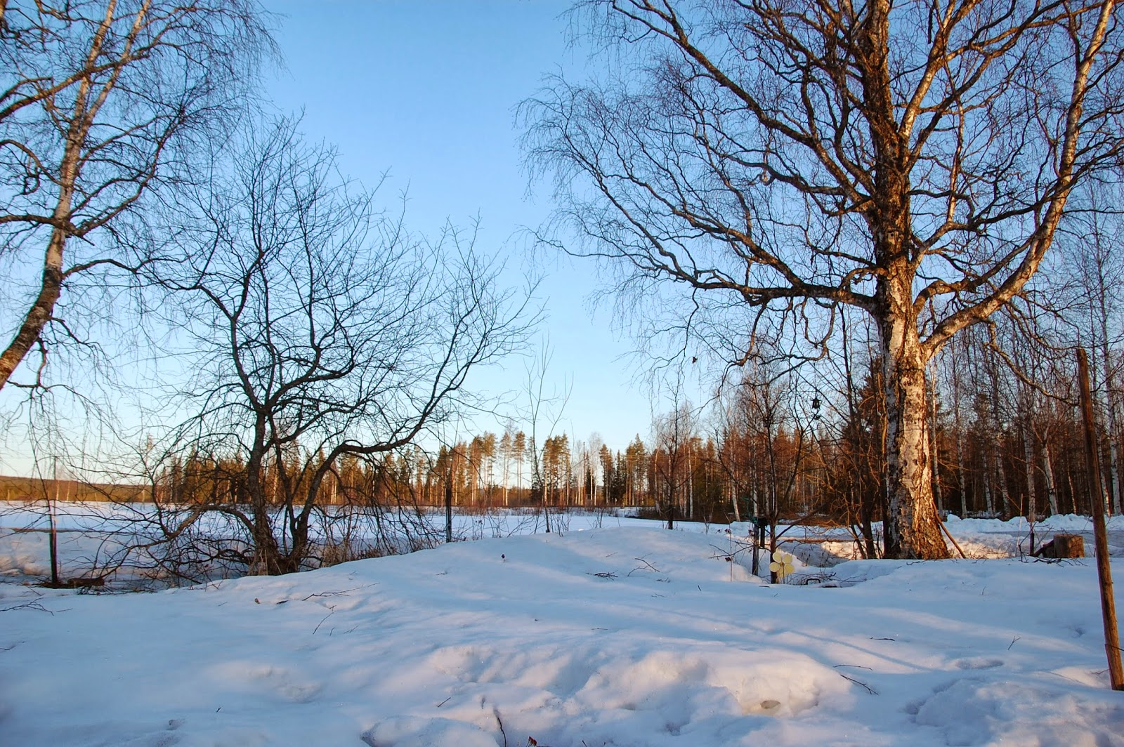 Svanå trädgård: mars 2014