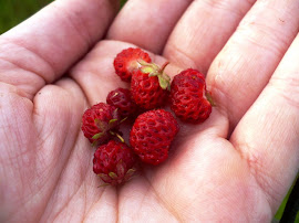Wild Strawberries!