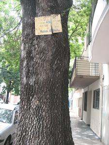 Éste es el árbol