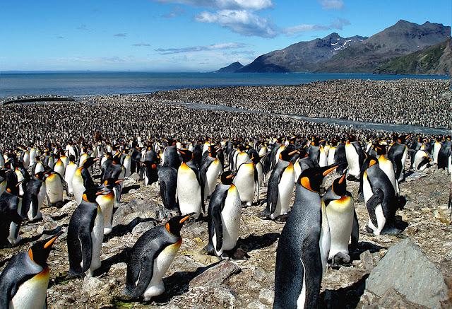 Meeting of Penguins